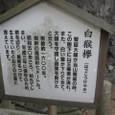 白猴欅(はっこうけやき)看板
